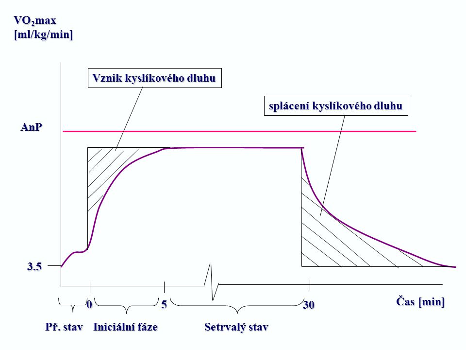 VO2max [ml/kg/min] Vznik kyslíkového dluhu. splácení kyslíkového dluhu. AnP. 3.5. Čas [min] 5.